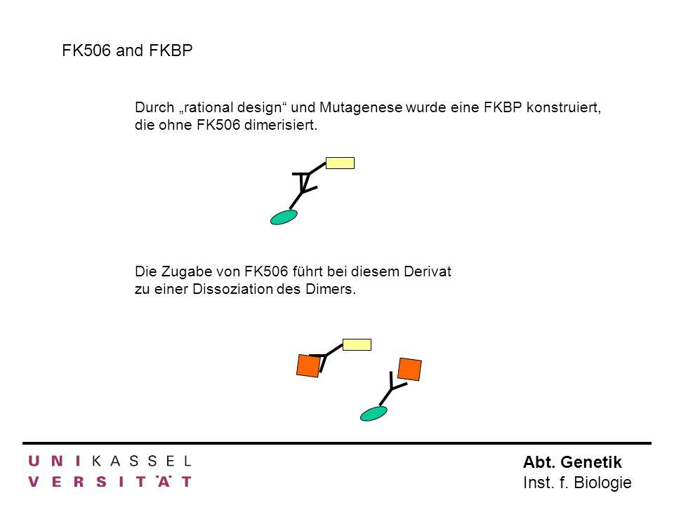 Abt. Genetik Inst. f. Biologie FK506 and FKBP Durch rational design und Mutagenese wurde eine FKBP konstruiert, die ohne FK506 dimerisiert. Die Zugabe