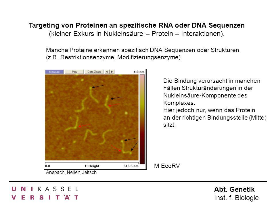 Abt. Genetik Inst. f. Biologie Targeting von Proteinen an spezifische RNA oder DNA Sequenzen (kleiner Exkurs in Nukleinsäure – Protein – Interaktionen