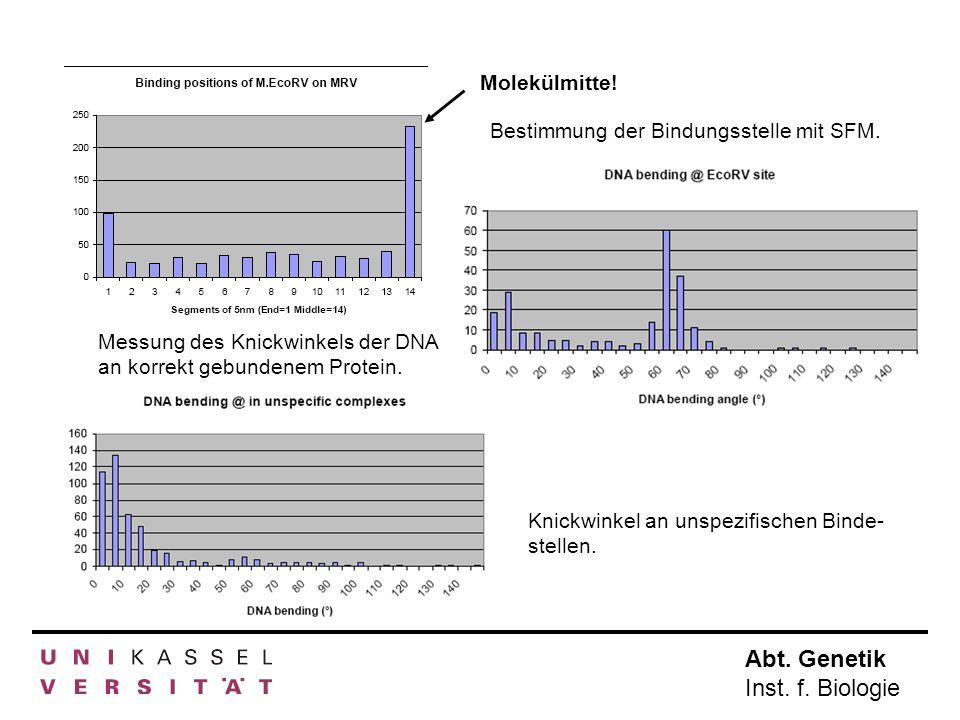Abt. Genetik Inst. f. Biologie Molekülmitte! Bestimmung der Bindungsstelle mit SFM. Messung des Knickwinkels der DNA an korrekt gebundenem Protein. Kn