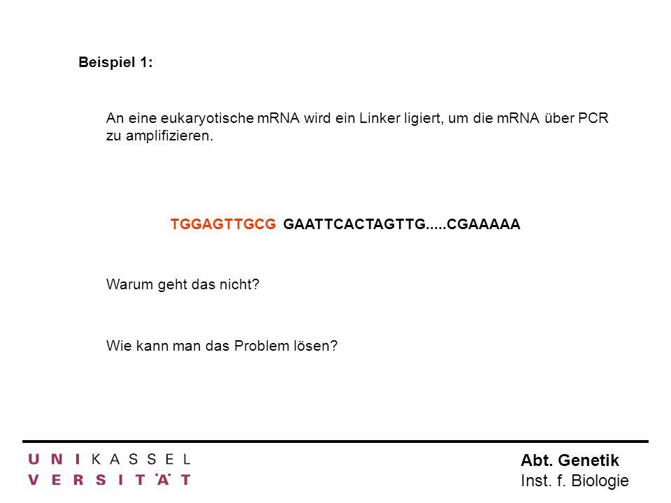 Abt.Genetik Inst. f. Biologie J. R. Horton, K. Liebert, M.