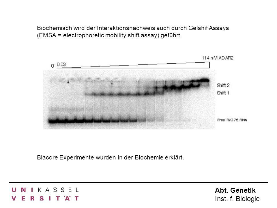 Abt. Genetik Inst. f. Biologie Biochemisch wird der Interaktionsnachweis auch durch Gelshif Assays (EMSA = electrophoretic mobility shift assay) gefüh