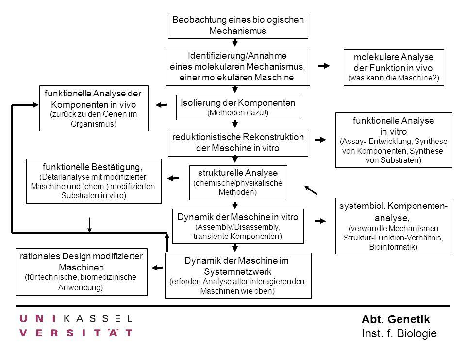 Abt. Genetik Inst. f. Biologie Beobachtung eines biologischen Mechanismus Isolierung der Komponenten (Methoden dazu!) Identifizierung/Annahme eines mo