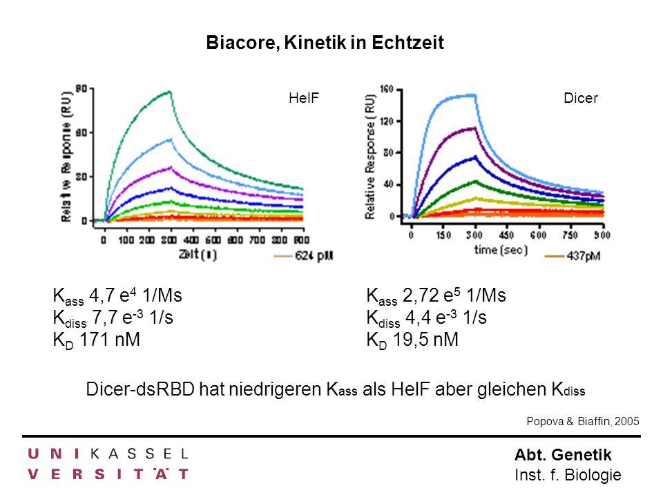 Abt. Genetik Inst. f. Biologie HelF Dicer Dicer-dsRBD hat niedrigeren K ass als HelF aber gleichen K diss K ass 2,72 e 5 1/Ms K diss 4,4 e -3 1/s K D