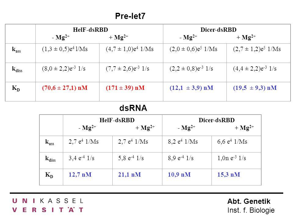 Abt. Genetik Inst. f. Biologie HelF-dsRBD - Mg 2+ + Mg 2+ Dicer-dsRBD - Mg 2+ + Mg 2+ k ass (1,3 ± 0,5)e 4 l/Ms(4,7 ± 1,0)e 4 1/Ms(2,0 ± 0,6)e 5 1/Ms(