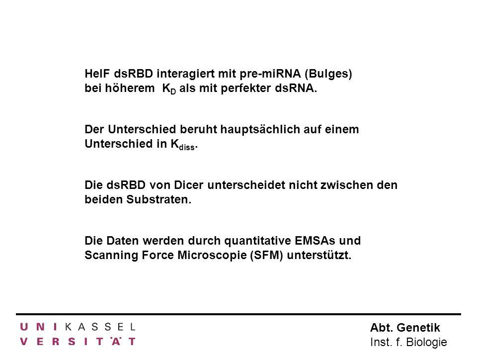 Abt. Genetik Inst. f. Biologie HelF dsRBD interagiert mit pre-miRNA (Bulges) bei höherem K D als mit perfekter dsRNA. Die dsRBD von Dicer unterscheide