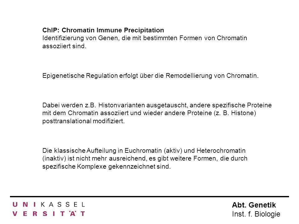 Abt. Genetik Inst. f. Biologie ChIP: Chromatin Immune Precipitation Identifizierung von Genen, die mit bestimmten Formen von Chromatin assoziiert sind