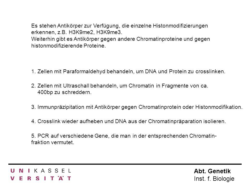 Abt. Genetik Inst. f. Biologie Es stehen Antikörper zur Verfügung, die einzelne Histonmodifizierungen erkennen, z.B. H3K9me2, H3K9me3. Weiterhin gibt
