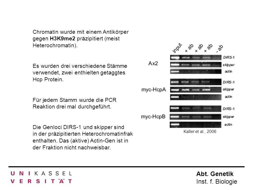 Abt. Genetik Inst. f. Biologie Chromatin wurde mit einem Antikörper gegen H3K9me2 präzipitiert (meist Heterochromatin). Es wurden drei verschiedene St