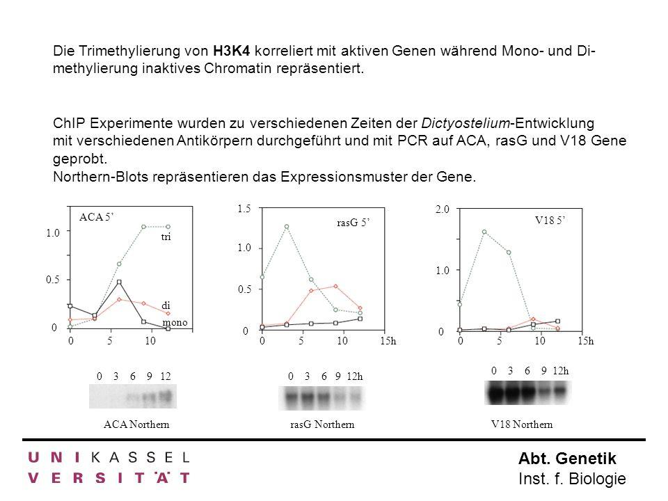 Abt. Genetik Inst. f. Biologie 0510 0 1.0 0.5 tri di mono ACA 5 036912 ACA Northern rasG Northern 036912h 051015h 0 1.0 1.5 0.5 rasG 5 036912h V18 Nor