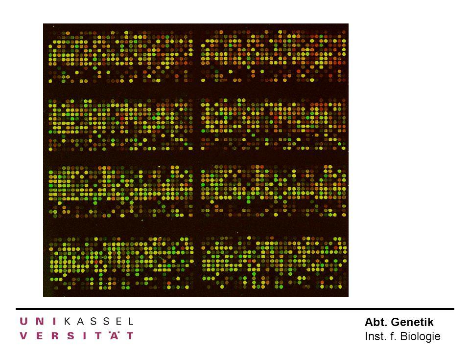 Abt. Genetik Inst. f. Biologie a) Microarrays Krankes GewebeGesundes Gewebe RNA isolieren rot markierengrün markieren mehr in krankem Gewebe gleich in