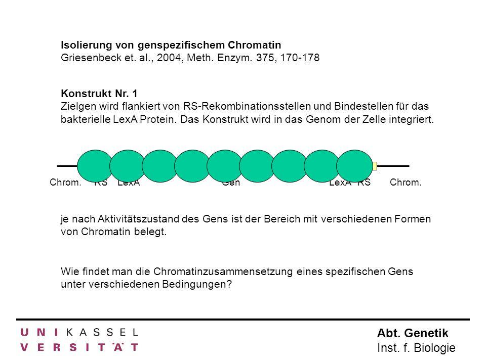 Abt. Genetik Inst. f. Biologie Isolierung von genspezifischem Chromatin Griesenbeck et. al., 2004, Meth. Enzym. 375, 170-178 Konstrukt Nr. 1 Zielgen w