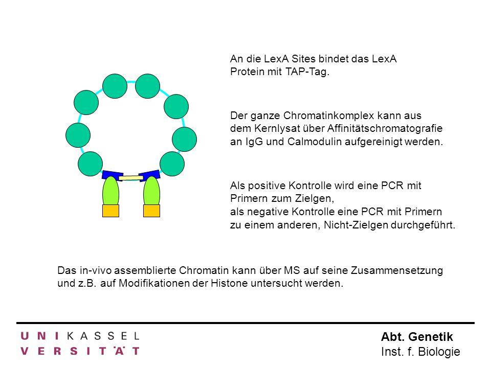 Abt. Genetik Inst. f. Biologie An die LexA Sites bindet das LexA Protein mit TAP-Tag. Der ganze Chromatinkomplex kann aus dem Kernlysat über Affinität