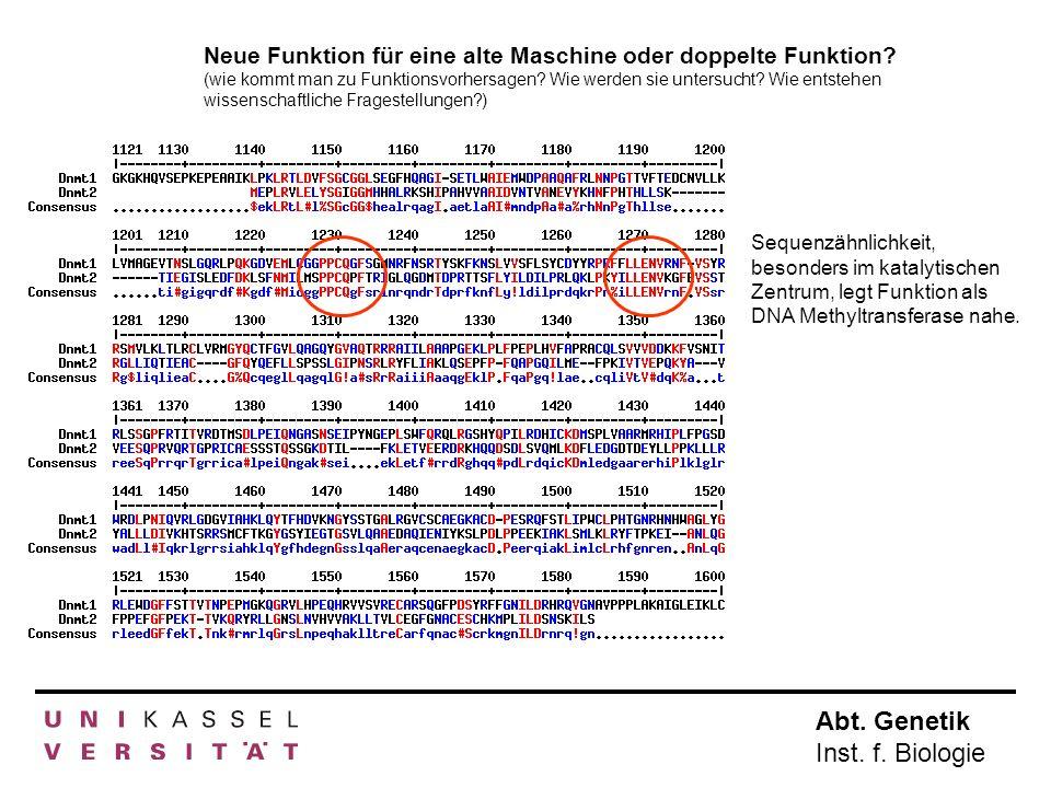 Abt. Genetik Inst. f. Biologie Neue Funktion für eine alte Maschine oder doppelte Funktion? (wie kommt man zu Funktionsvorhersagen? Wie werden sie unt