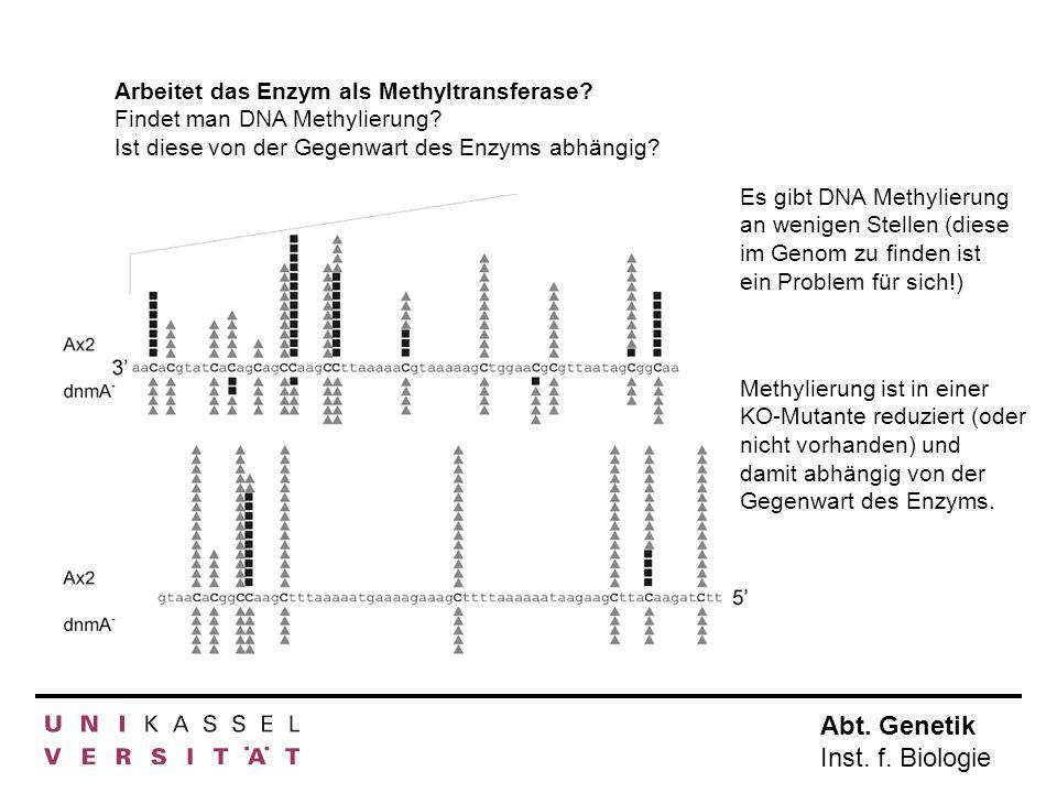 Abt. Genetik Inst. f. Biologie Arbeitet das Enzym als Methyltransferase? Findet man DNA Methylierung? Ist diese von der Gegenwart des Enzyms abhängig?