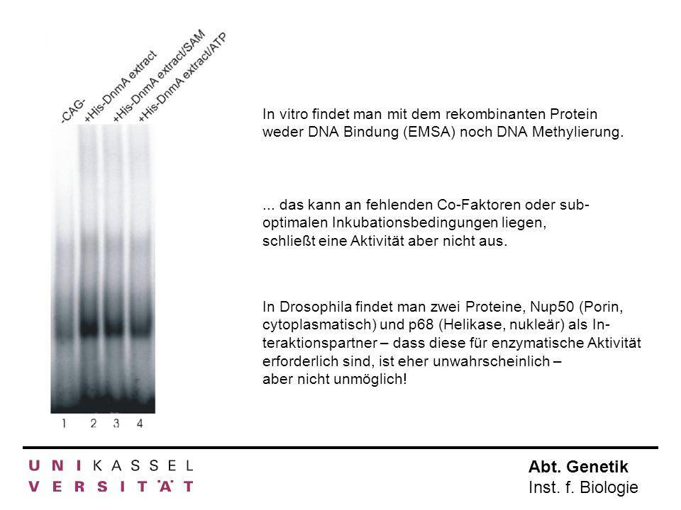Abt. Genetik Inst. f. Biologie In vitro findet man mit dem rekombinanten Protein weder DNA Bindung (EMSA) noch DNA Methylierung.... das kann an fehlen