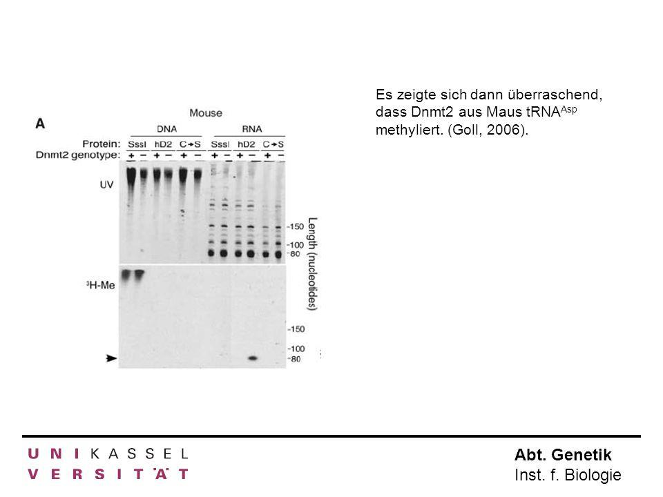 Abt. Genetik Inst. f. Biologie Es zeigte sich dann überraschend, dass Dnmt2 aus Maus tRNA Asp methyliert. (Goll, 2006).