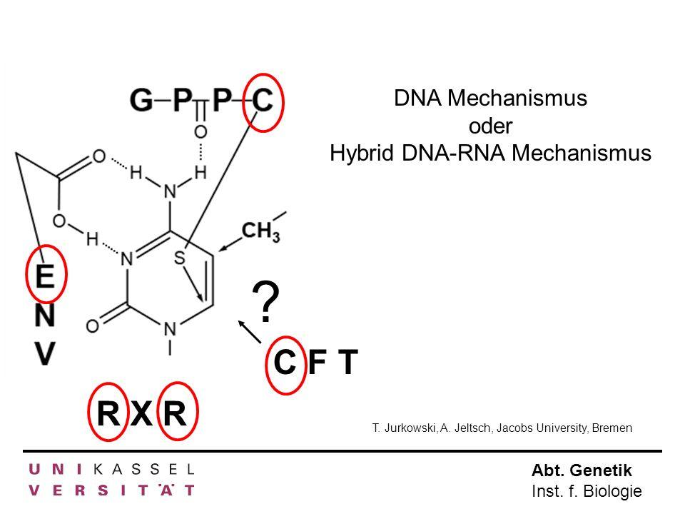Abt. Genetik Inst. f. Biologie R X R C F T ? DNA Mechanismus oder Hybrid DNA-RNA Mechanismus T. Jurkowski, A. Jeltsch, Jacobs University, Bremen