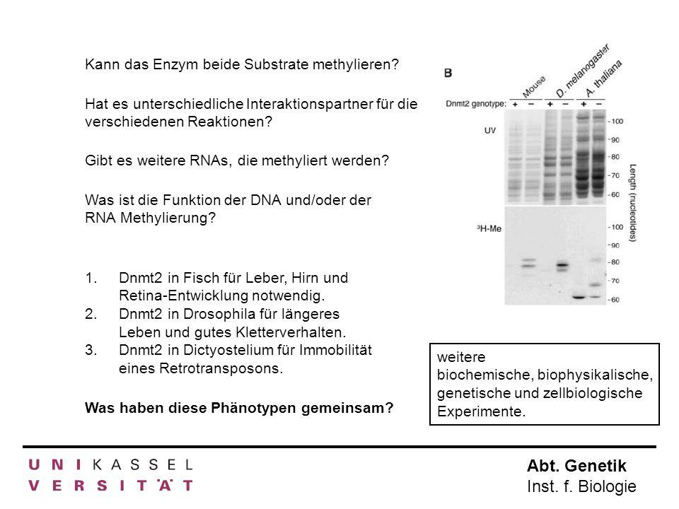 Abt. Genetik Inst. f. Biologie Kann das Enzym beide Substrate methylieren? Hat es unterschiedliche Interaktionspartner für die verschiedenen Reaktione