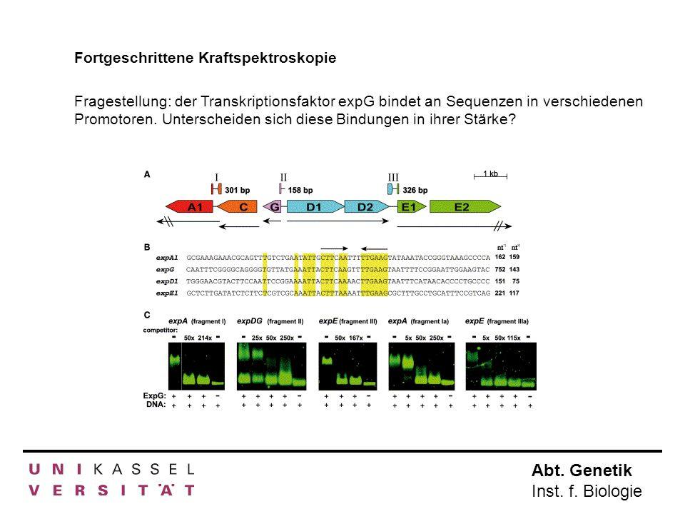 Abt. Genetik Inst. f. Biologie Fortgeschrittene Kraftspektroskopie Fragestellung: der Transkriptionsfaktor expG bindet an Sequenzen in verschiedenen P