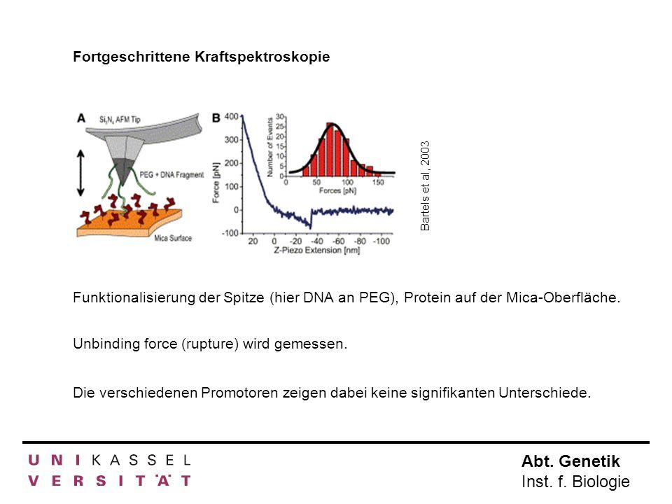 Abt. Genetik Inst. f. Biologie Fortgeschrittene Kraftspektroskopie Funktionalisierung der Spitze (hier DNA an PEG), Protein auf der Mica-Oberfläche. B