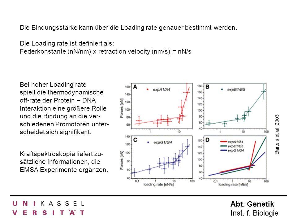 Abt. Genetik Inst. f. Biologie Die Bindungsstärke kann über die Loading rate genauer bestimmt werden. Die Loading rate ist definiert als: Federkonstan