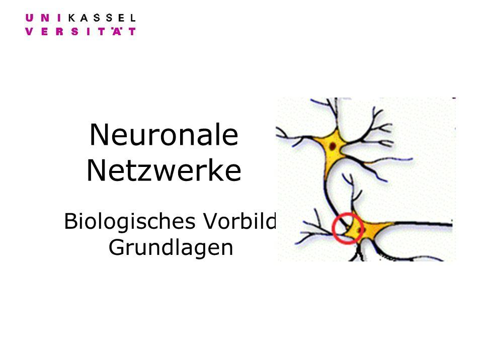 Neuronale Netzwerke Biologisches Vorbild Grundlagen