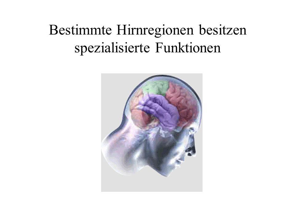 Bestimmte Hirnregionen besitzen spezialisierte Funktionen