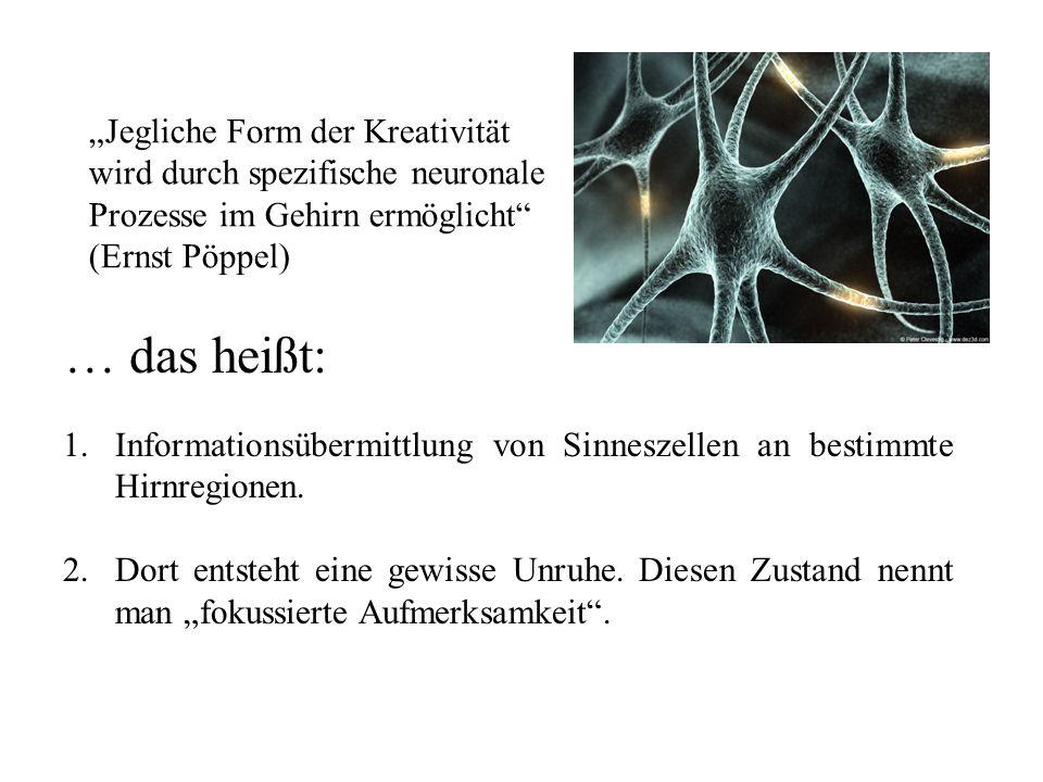 1.Informationsübermittlung von Sinneszellen an bestimmte Hirnregionen.