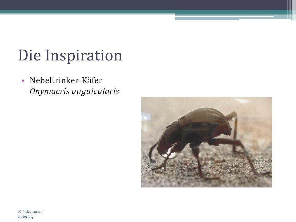 Die Inspiration Nebeltrinker-Käfer Onymacris unguicularis M.M.Bollmann, F.Herwig