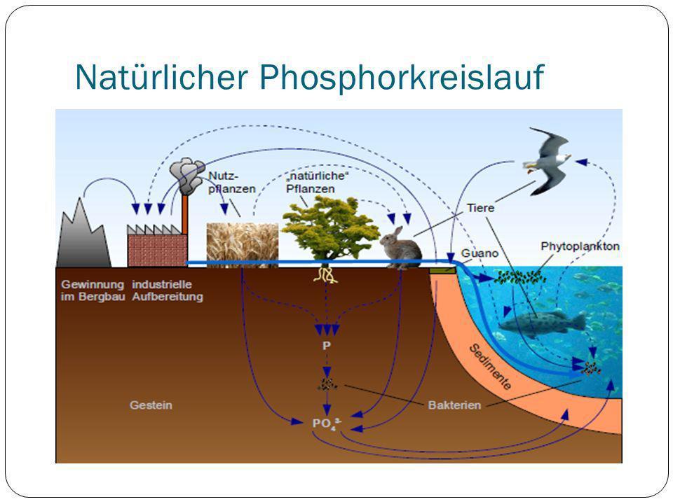 Natürlicher Phosphorkreislauf