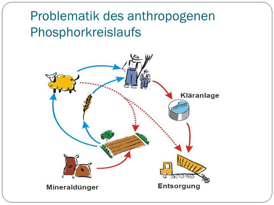 Problematik des anthropogenen Phosphorkreislaufs