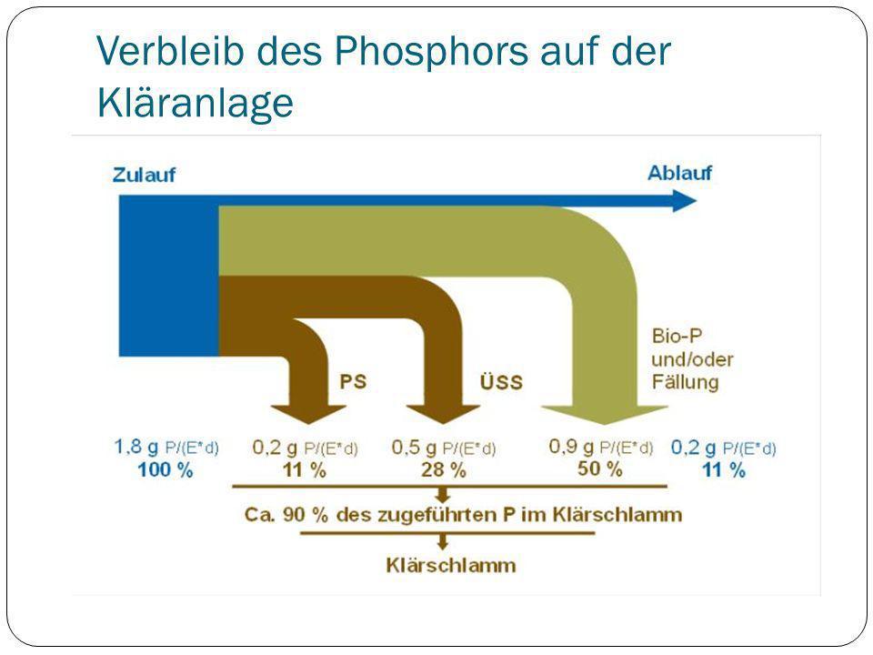Verbleib des Phosphors auf der Kläranlage