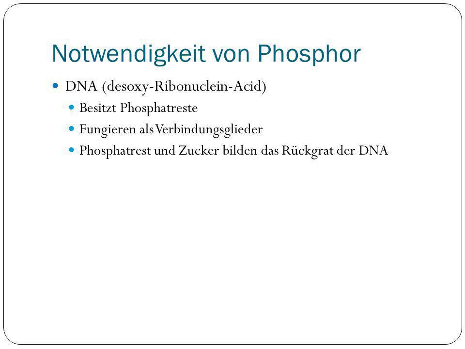 Notwendigkeit von Phosphor DNA (desoxy-Ribonuclein-Acid) Besitzt Phosphatreste Fungieren als Verbindungsglieder Phosphatrest und Zucker bilden das Rüc