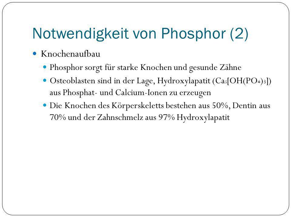 Notwendigkeit von Phosphor (2) Knochenaufbau Phosphor sorgt für starke Knochen und gesunde Zähne Osteoblasten sind in der Lage, Hydroxylapatit (Ca 5 [