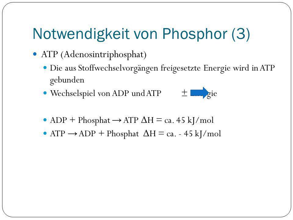 Notwendigkeit von Phosphor (3) ATP (Adenosintriphosphat) Die aus Stoffwechselvorgängen freigesetzte Energie wird in ATP gebunden Wechselspiel von ADP
