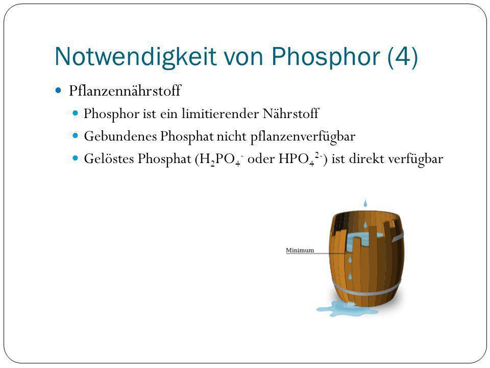 Notwendigkeit von Phosphor (4) Pflanzennährstoff Phosphor ist ein limitierender Nährstoff Gebundenes Phosphat nicht pflanzenverfügbar Gelöstes Phospha