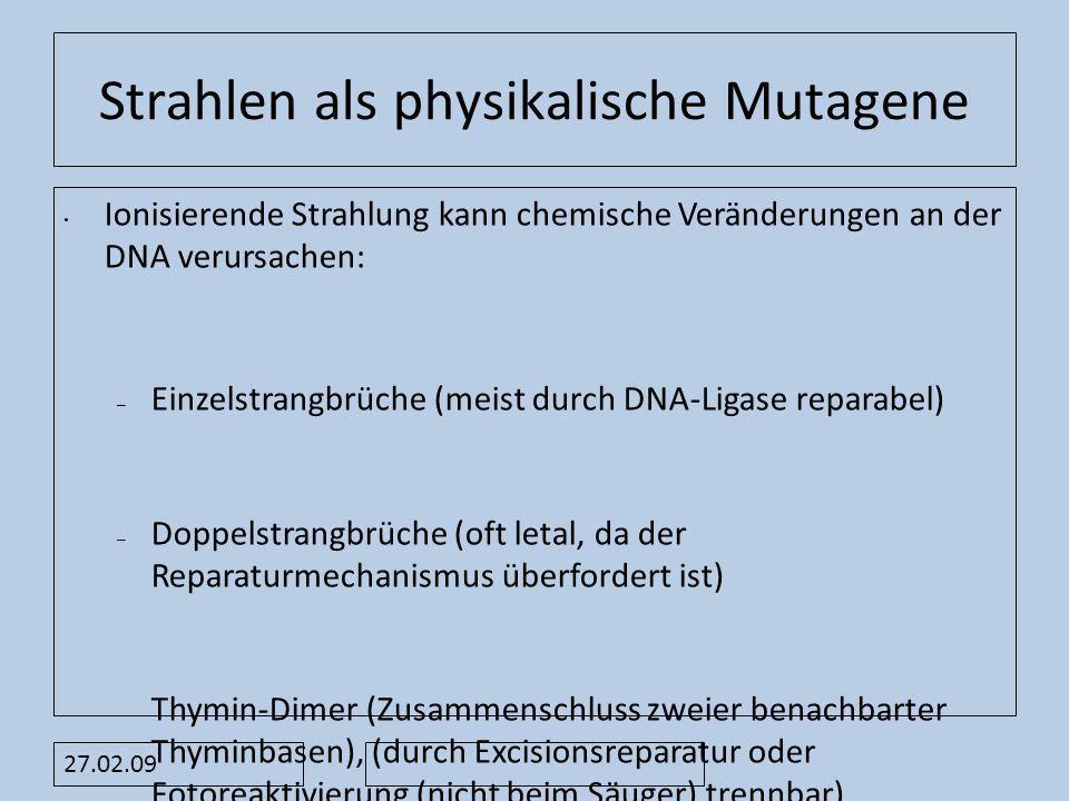 27.02.09 Strahlen als physikalische Mutagene Ionisierende Strahlung kann chemische Veränderungen an der DNA verursachen: – Einzelstrangbrüche (meist d