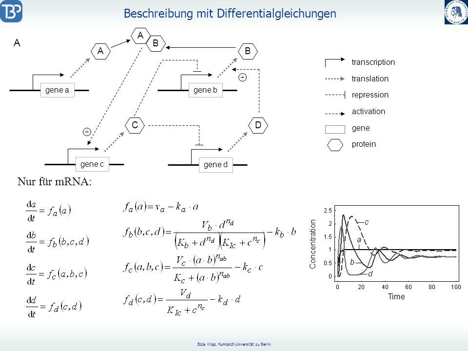 Edda Klipp, Humboldt-Universität zu Berlin Beschreibung mit Differentialgleichungen Time Concentration a d b c Nur für mRNA: gene agene bgene cgene d C A D B A B + + repression activation transcription translation gene protein A