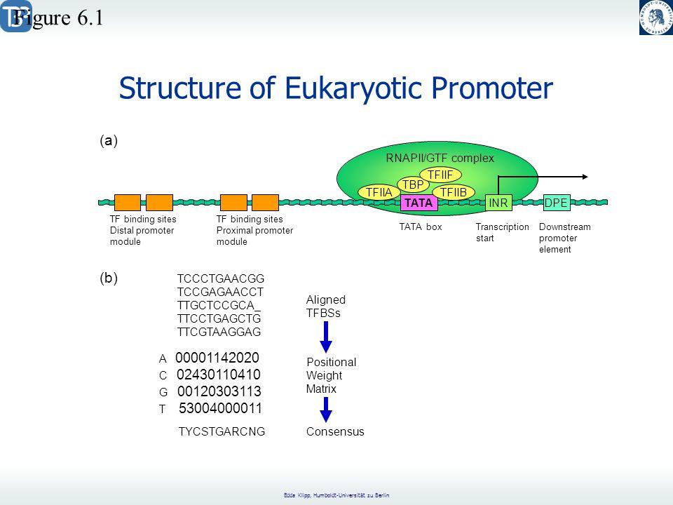 Edda Klipp, Humboldt-Universität zu Berlin Structure of Eukaryotic Promoter (a) Figure 6.1 TATA INRDPE TFIIA TBP TFIIF TFIIB RNAPII/GTF complex TF binding sites Distal promoter module TF binding sites Proximal promoter module TATA boxTranscription start Downstream promoter element (b) TCCCTGAACGG TCCGAGAACCT TTGCTCCGCA_ TTCCTGAGCTG TTCGTAAGGAG A 00001142020 C 02430110410 G 00120303113 T 53004000011 Aligned TFBSs TYCSTGARCNG Positional Weight Matrix Consensus