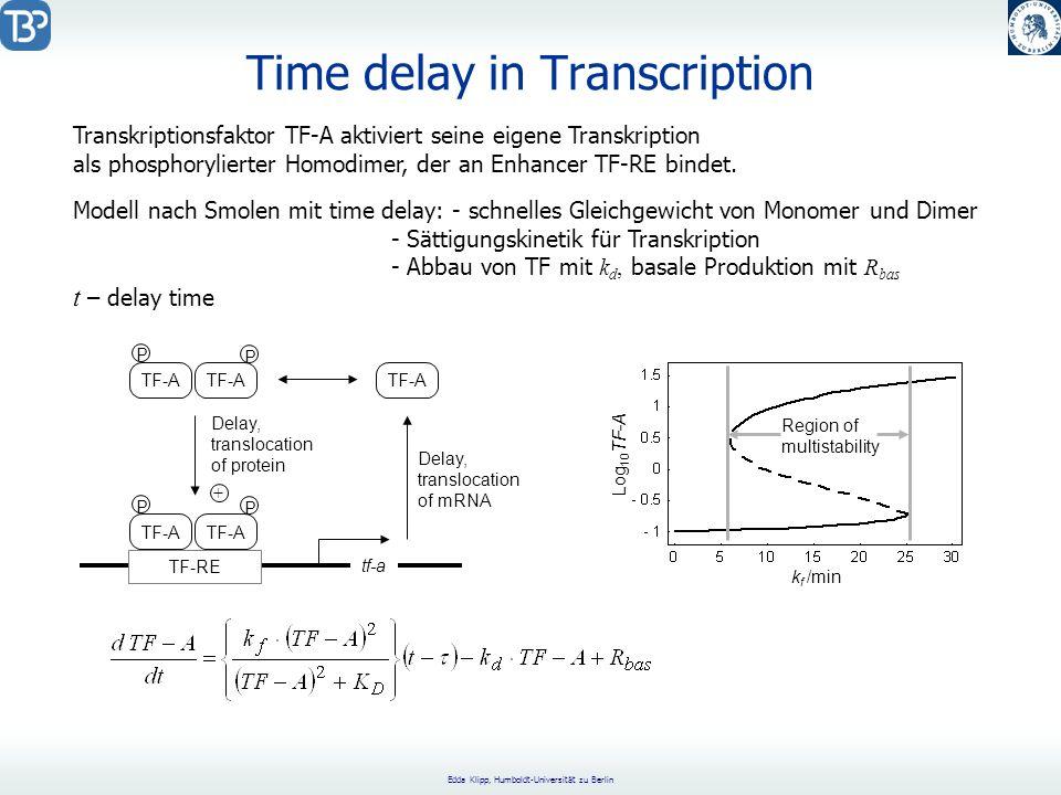 Edda Klipp, Humboldt-Universität zu Berlin Time delay in Transcription TF-RE TF-A P P P P tf-a Delay, translocation of mRNA Delay, translocation of protein + k f /min Log 10 TF-A Region of multistability Transkriptionsfaktor TF-A aktiviert seine eigene Transkription als phosphorylierter Homodimer, der an Enhancer TF-RE bindet.