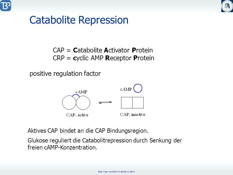 Edda Klipp, Humboldt-Universität zu Berlin Catabolite Repression CAP = Catabolite Activator Protein CRP = cyclic AMP Receptor Protein positive regulation factor Aktives CAP bindet an die CAP Bindungsregion.