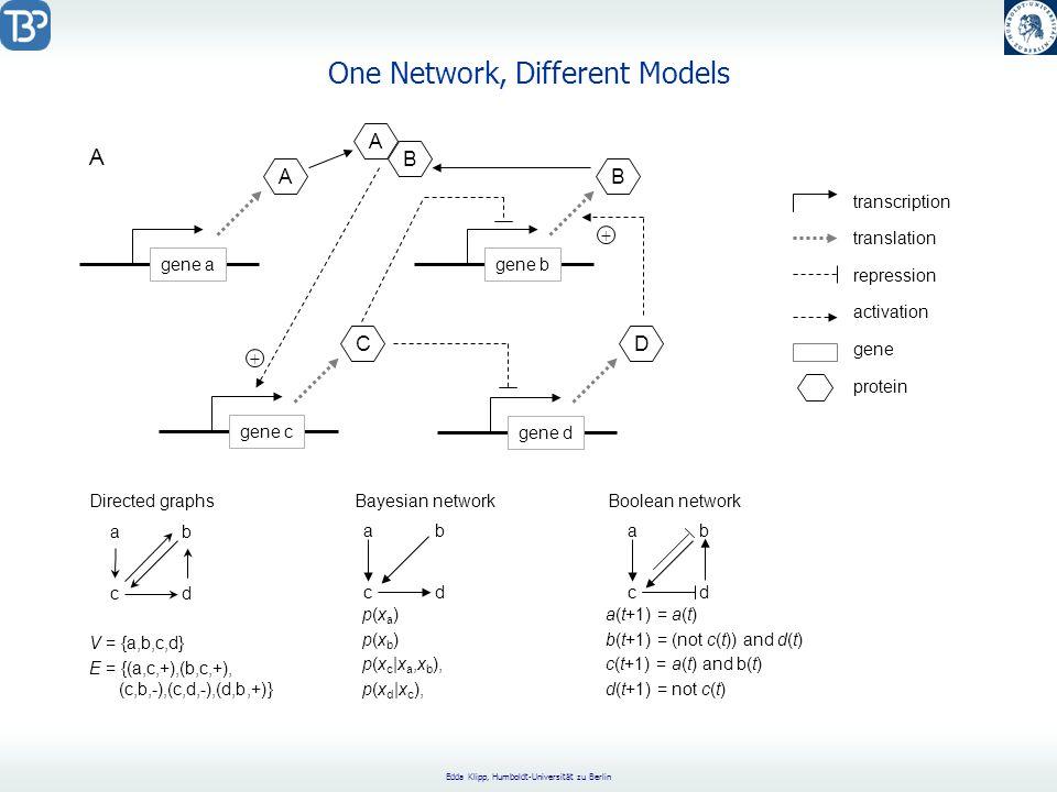 Edda Klipp, Humboldt-Universität zu Berlin One Network, Different Models gene agene bgene cgene d C A D B A B + + repression activation transcription