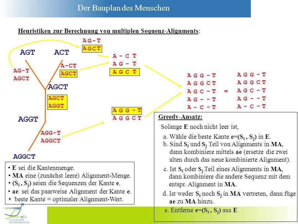 Der Bauplan des Menschen Heuristiken zur Berechnung von multiplen Sequenz-Alignments: AGCT AGT ACT AGGT AGGCT AG-T AGCT A-CT AGCT AGGT AGG-T AGGCT AAA