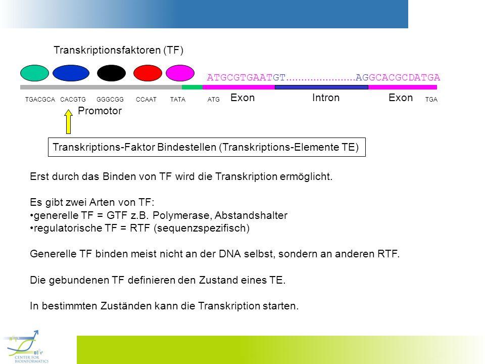 Transkriptions-Faktor Bindestellen (Transkriptions-Elemente TE) Erst durch das Binden von TF wird die Transkription ermöglicht. Es gibt zwei Arten von