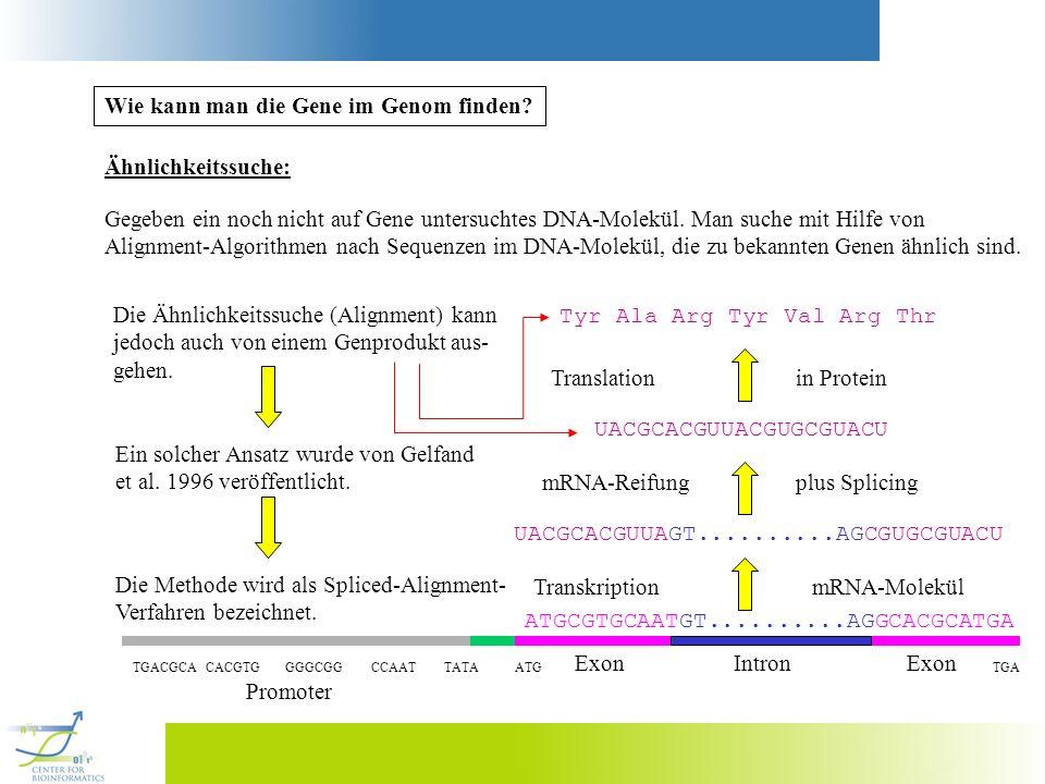 Wie kann man die Gene im Genom finden? ATGCGTGCAATGT..........AGGCACGCATGA TGACGCA CACGTG GGGCGG CCAAT TATA ATG TGA Exon Intron Exon Promoter Ähnlichk