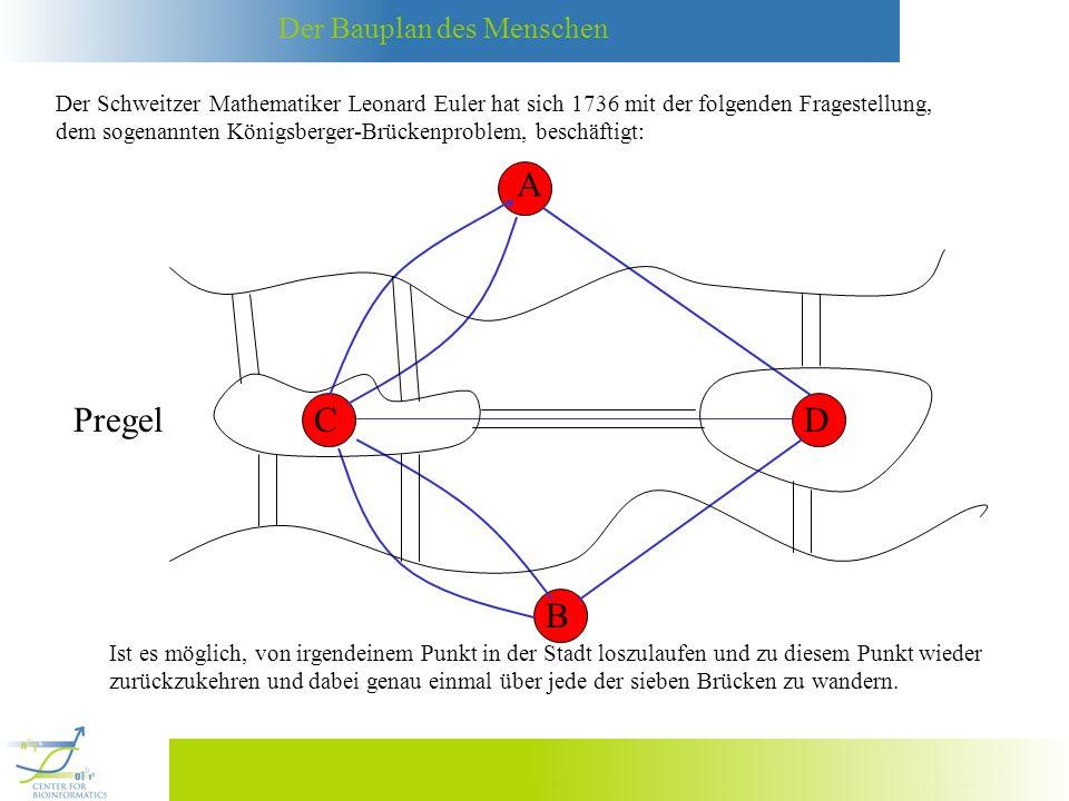 Der Bauplan des Menschen Der Schweitzer Mathematiker Leonard Euler hat sich 1736 mit der folgenden Fragestellung, dem sogenannten Königsberger-Brückenproblem, beschäftigt: A B CD = Gibt es einen Circuit in diesem Graphen, der jede Kante nur einmal begeht (verwendet).