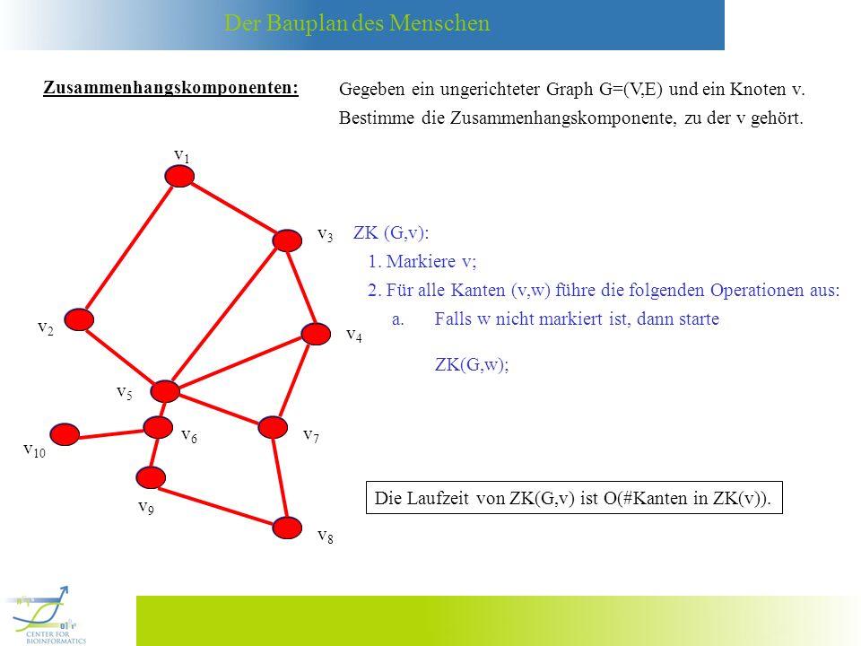 Der Bauplan des Menschen v4v4 v1v1 v3v3 v2v2 v5v5 v6v6 v7v7 v8v8 v9v9 v 10 Zusammenhangskomponenten: Gegeben ein ungerichteter Graph G=(V,E) und ein Knoten v.