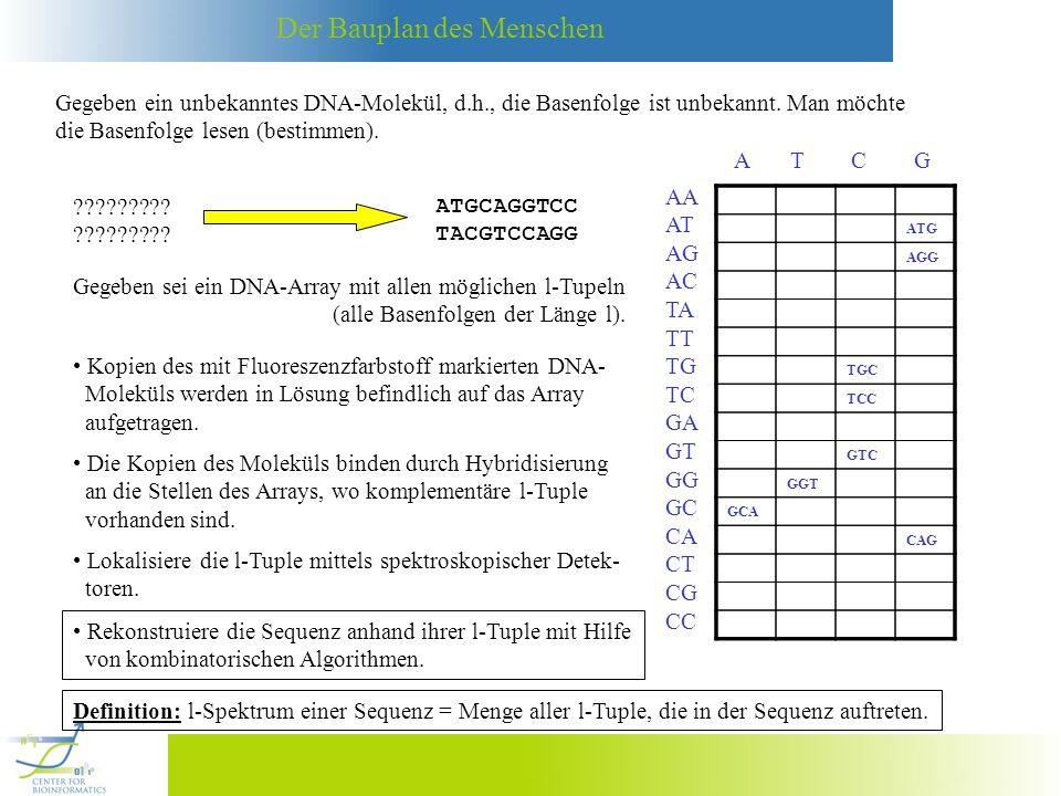 Der Bauplan des Menschen Gegeben ein unbekanntes DNA-Molekül, d.h., die Basenfolge ist unbekannt. Man möchte die Basenfolge lesen (bestimmen). ???????