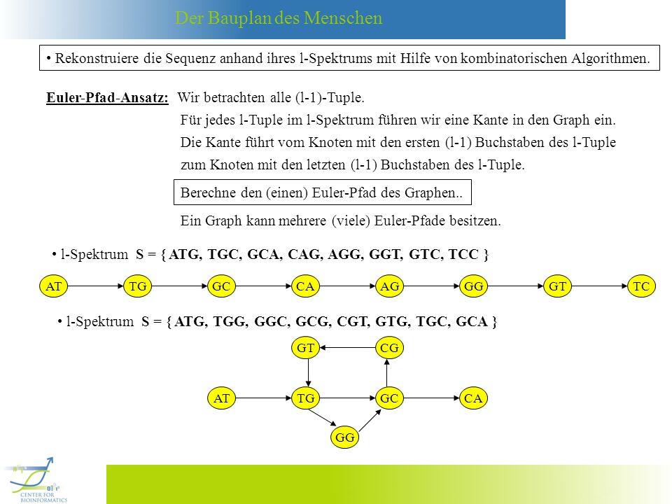 Der Bauplan des Menschen Wie kann man testen, ob ein Euler-Graph einen eindeutig bestimmten Euler-Circuit besitzt.