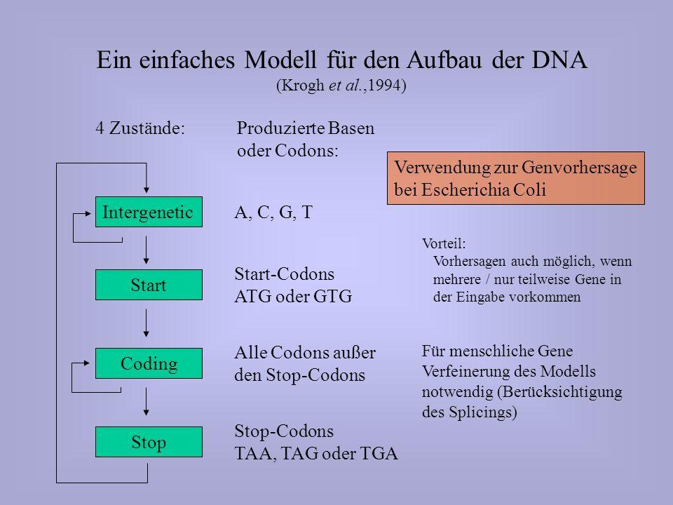 Ein einfaches Modell für den Aufbau der DNA (Krogh et al.,1994) Intergenetic Start Stop Coding Produzierte Basen oder Codons: A, C, G, T Start-Codons ATG oder GTG Alle Codons außer den Stop-Codons Stop-Codons TAA, TAG oder TGA 4 Zustände: Verwendung zur Genvorhersage bei Escherichia Coli Vorteil: Vorhersagen auch möglich, wenn mehrere / nur teilweise Gene in der Eingabe vorkommen Für menschliche Gene Verfeinerung des Modells notwendig (Berücksichtigung des Splicings)